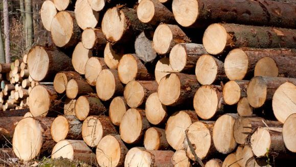 A pile of timber logs